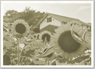 1962年の夏